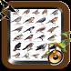 Papel de parede e som cheio de pássaros Brasil by Raja Burung App
