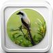 Kicau Burung Cendet Juara by Omah Pandega