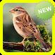 Master Kicau Burung Gereja Terbaru by Topek App