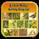 Koleksi Kicau Burung Lengkap by Silalahi App