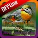 Kicau Burung Robin Gacor Juara Offline by takumidev