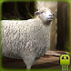 Cute Sheep Simulator by SPECTRUMsoft