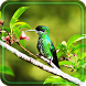 Humming Bird live wallpaper by Free Live Wallpaper Lab