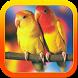Terapi Lovebird Mania by ard app