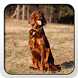 Irish Setter Theme - Nova/ADW by Fun Apps and Themes