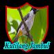 Kutilang Jambul by RamadhanDev
