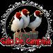 Fêmea Galo de Campina Chamando by Raja Burung App
