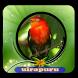 Canto de Pássaros de Uirapuru|100% Offline by Putra dan Putri Dev