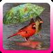 Tips perawatan burung pada musim hujan by Topek App