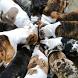 Bulldogs Wallpapers