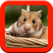 Hamster Care Guide by Supernova Solutions Group