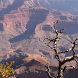 grand canyon live wallpaper by Pretty and cute wallpapers llc