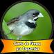 Canto de Fêmea pra Esquentar by Canto Media
