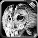 Owl Wallpaper by MagicIdea