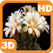 Blooming Flower Cactus Buds by PiedLove.com 3D HD Live Wallpapers