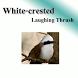 นกกะรางหัวหงอก เสียงนกต่อ by sansertan