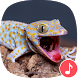 Appp.io - Gecko Sounds by Appp.io