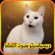 ديسباسيتو بصوت القطط by kozaanmanar