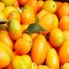 Kumquat For Health by KrishMiniApps