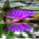 Purple Blue Flower LWP by Daksh Apps