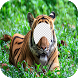 Tiger Lion Face Changer by Kelupis