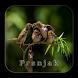 Masteran Burung Prenjak by Silalahi App