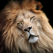 Wild Animal Wallpapers HD by DIAMOND Wallpapers