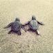 Cute Turtle Wallpapers by Warhawk Enterprise