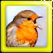 Master Kicau Burung Lengkap