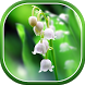 Lily of The Valley Wallpaper by Live Wallpapers 3D