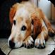 Dog Sounds by mistic.app