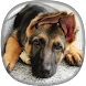 German Shepherd Wallpapers by CreativeOne