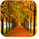Autumn Maple Live Wallpaper by Red Zone