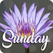 Happy Sunday by V.S.J studio