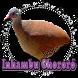 Canto de Lambu by Raja Burung App
