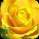 Rose Wallpaper by niebo smoka