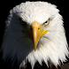 free live eagle wallpapers by amazing live wallpaper llc