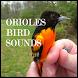 Oriole Bird Sounds by HD Sounds Inc