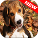 Beagle Wallpapers by Animal Wallpapers