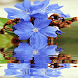 Blue Flower Reflection LWP by COOL & CRAZY APPS