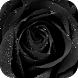 Black Rose Live Wallpaper by lymphoryx