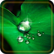 Drops Dew live wallpaper by Live Wallpaper Exellent