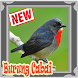 Ocehan Burung Cabai Terbaru Mp3 by Natal Publisher