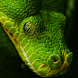 Snake Live Wallpaper by Tanguyerfo