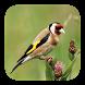 Vogelarten Melde-App by Haupt Verlag AG