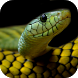 Snake Wallpapers by eBook Apps