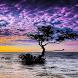Ocean Tree Live Wallpaper by Daksh Apps