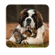Cats & Dogs HD Wallpapers by Janak Chauhan