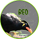 Kicau Burung BEO 2017
