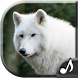 Wolf Sounds by GreatRingtonesSounds
